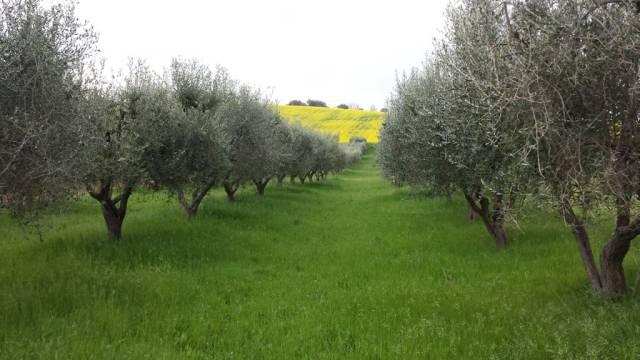 Terreno Agricolo in vendita a Nereto, 9999 locali, prezzo € 16.000   CambioCasa.it