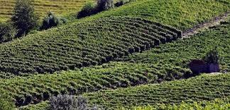 terreno agricolo vendita nizza monferrato di metri quadrati 100000 prezzo 1950000
