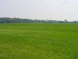 Terreno Commerciale in Vendita a Ferrara Rif.9710001