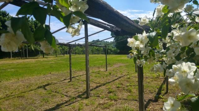 Terreno Agricolo in vendita a Caluso, 9999 locali, prezzo € 19.000   CambioCasa.it