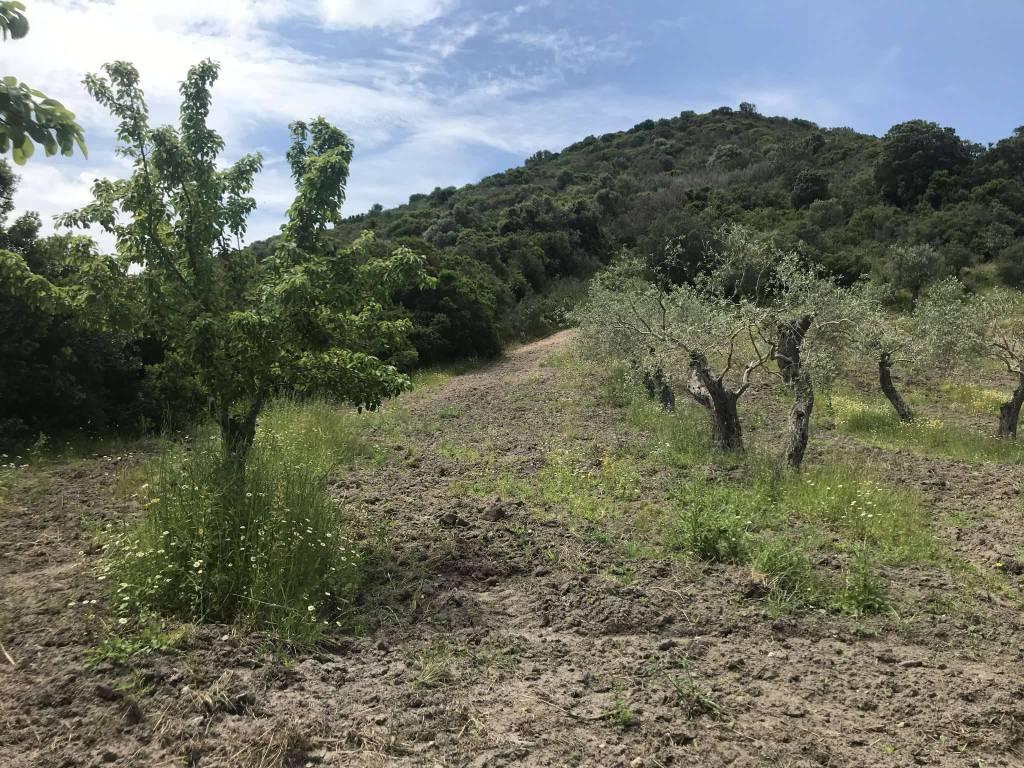 Terreno Agricolo in vendita a Alghero, 9999 locali, prezzo € 50.000 | PortaleAgenzieImmobiliari.it