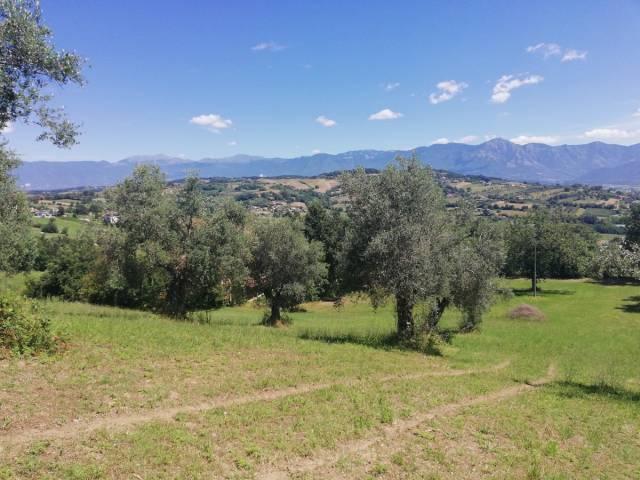Terreno Agricolo in vendita a Ruviano, 9999 locali, prezzo € 39.000 | CambioCasa.it