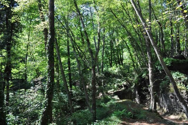 Borgosesia - fraz. - Terreni agricoli boschivi Rif. 7324560