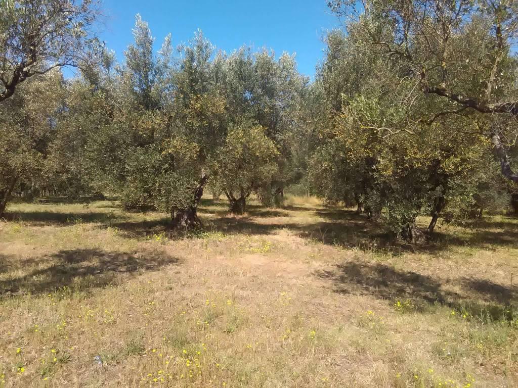 Terreno Agricolo in vendita a Vetralla, 9999 locali, prezzo € 25.000   CambioCasa.it