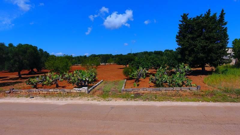 Terreno Agricolo – Zona Borgo di Serranova - Rif. 7399967
