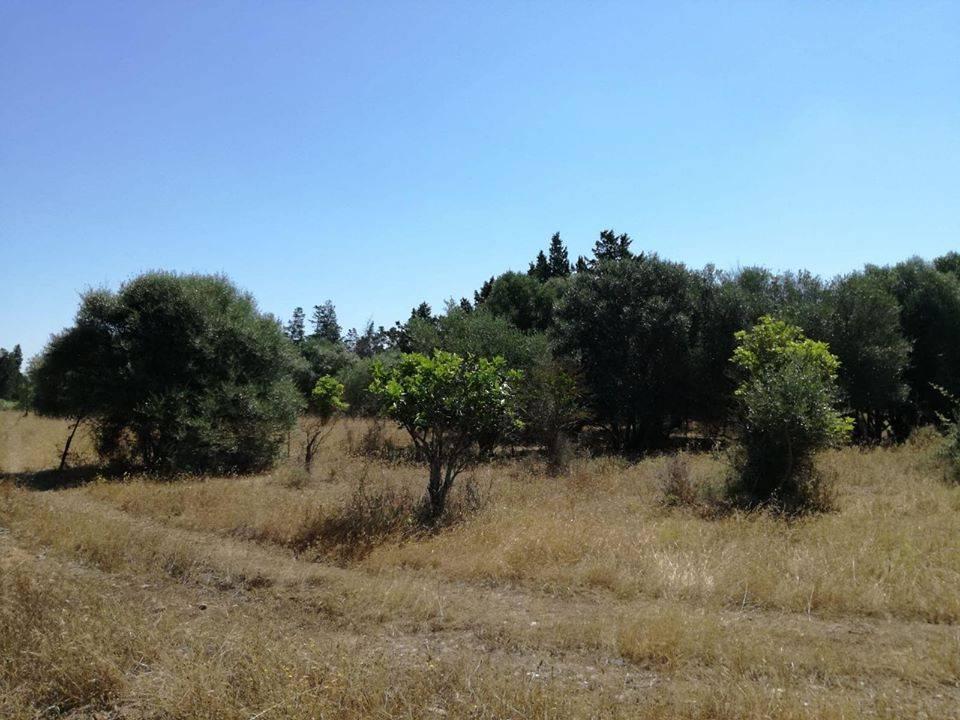 Terreno agricolo piantumato