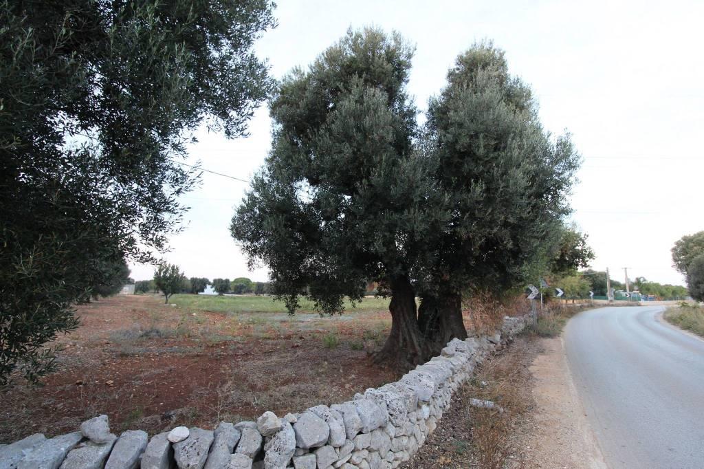 Terreno 10.000 mq, Strada provinciale per Serranova Rif. 8007370