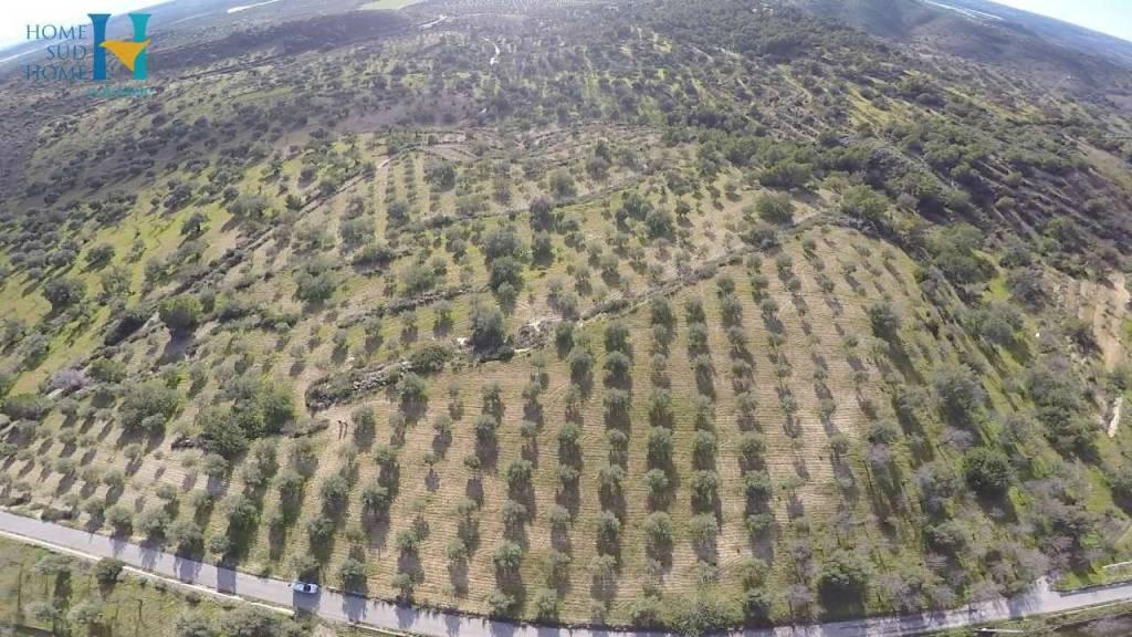 Terreno Agricolo a Noto in Vendita