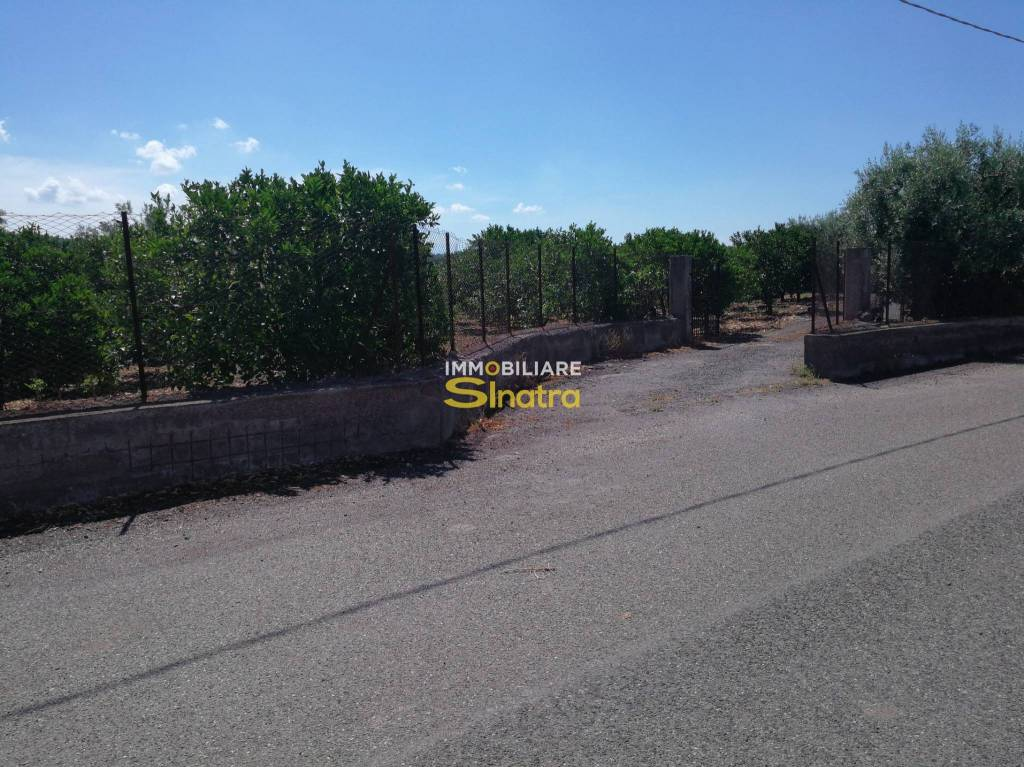 Terreno agricolo in vendita a Santa Maria di Licodia (CT)