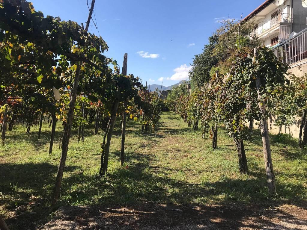 Terreno Agricolo in vendita a Salerno, 9999 locali, prezzo € 65.000   CambioCasa.it