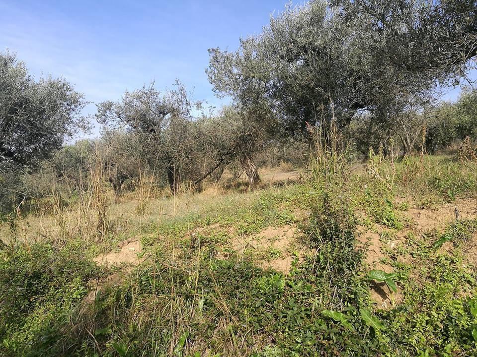 Montelibretti terreno agricolo di mq 3.565 in vendita Rif. 8573365
