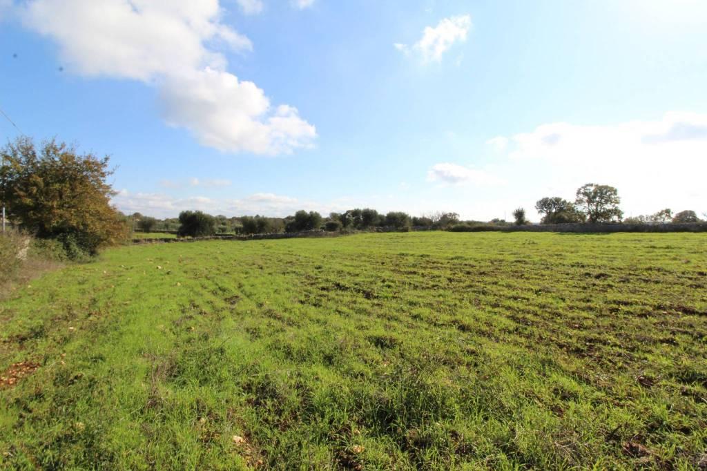 Terreno 11.000 mq con progetto approvato Rif. 8620013
