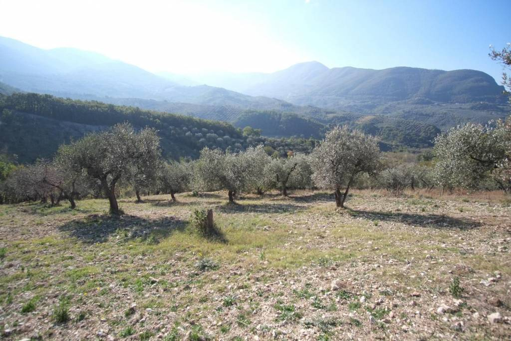 SCANDRIGLIA (RI):Terreno agricolo con ulivi!!!