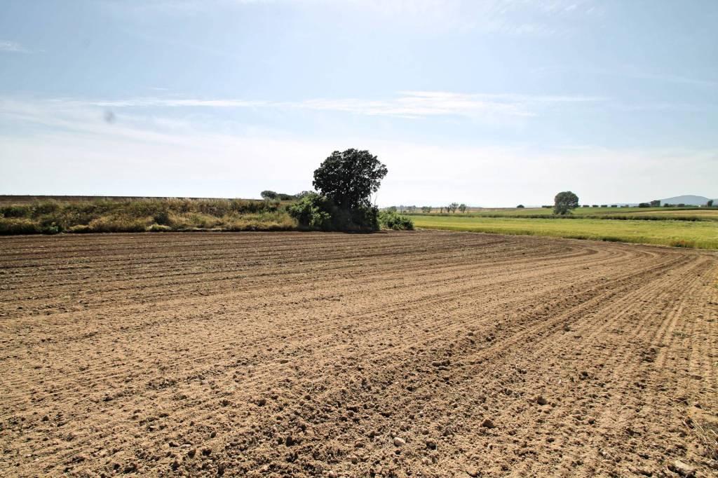 Terreno agricolo vista Capalbio Rif. 9012342