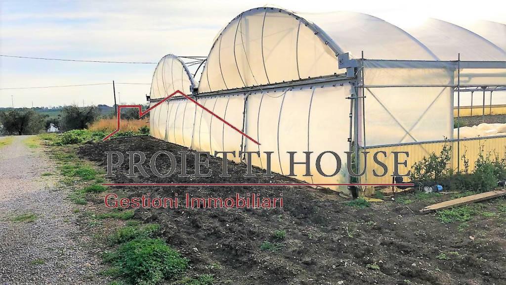 Azienda agricola agrituristica Capalbio (GR) Rif. 9198485