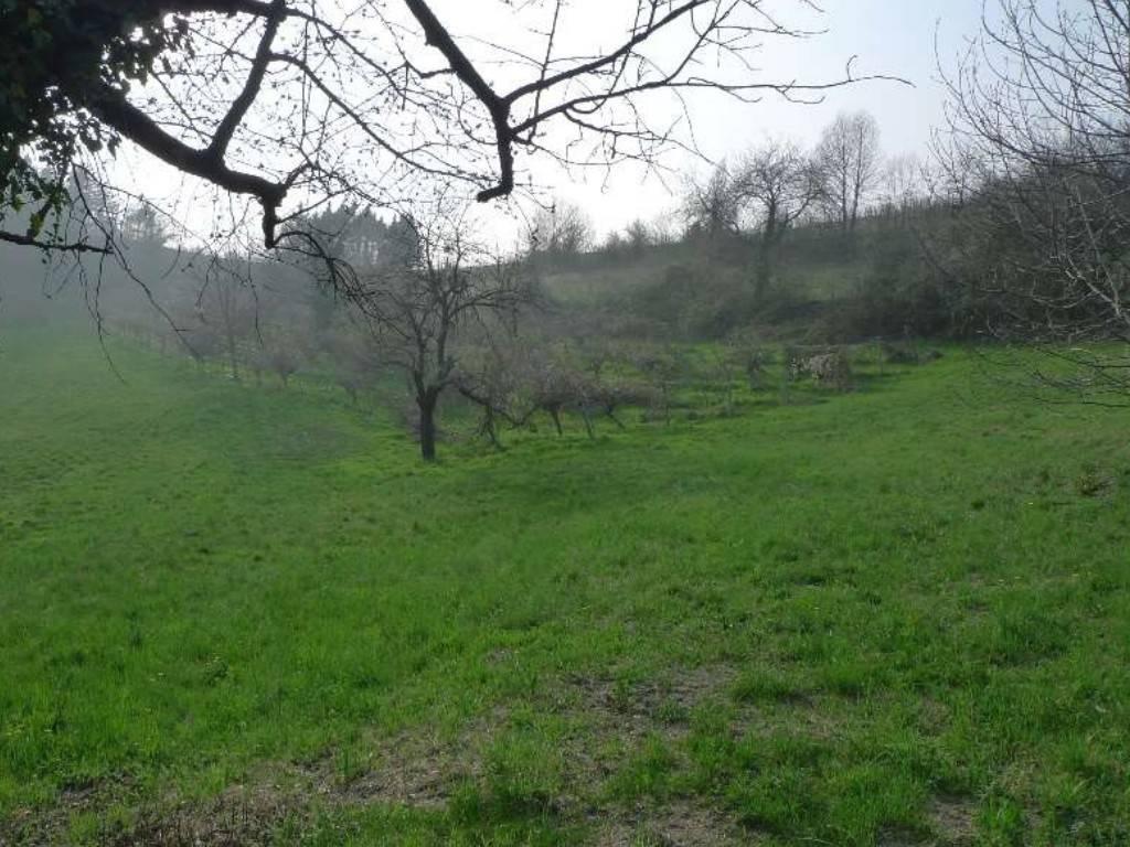 Terreno Agricolo in vendita a Cinzano, 9999 locali, prezzo € 140.000 | PortaleAgenzieImmobiliari.it