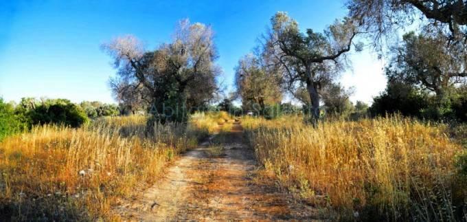 Terreno Agricolo in vendita a Alessano, 9999 locali, prezzo € 28.000   CambioCasa.it