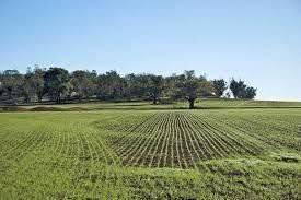 Terreno Agricolo in vendita a Caluso, 9999 locali, prezzo € 30.000 | CambioCasa.it