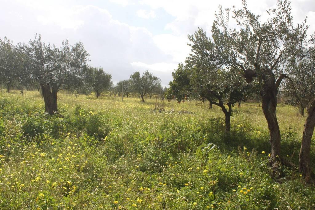 Terreno Agricolo in vendita a Partinico, 9999 locali, prezzo € 50.000 | CambioCasa.it