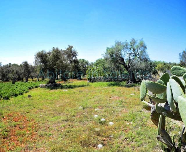 Terreno Agricolo in vendita a Castrignano del Capo, 9999 locali, prezzo € 33.000 | CambioCasa.it