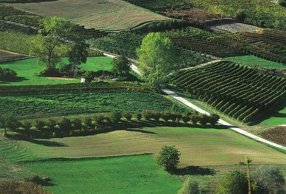 Terreno Agricolo in vendita a La Morra, 9999 locali, Trattative riservate | PortaleAgenzieImmobiliari.it