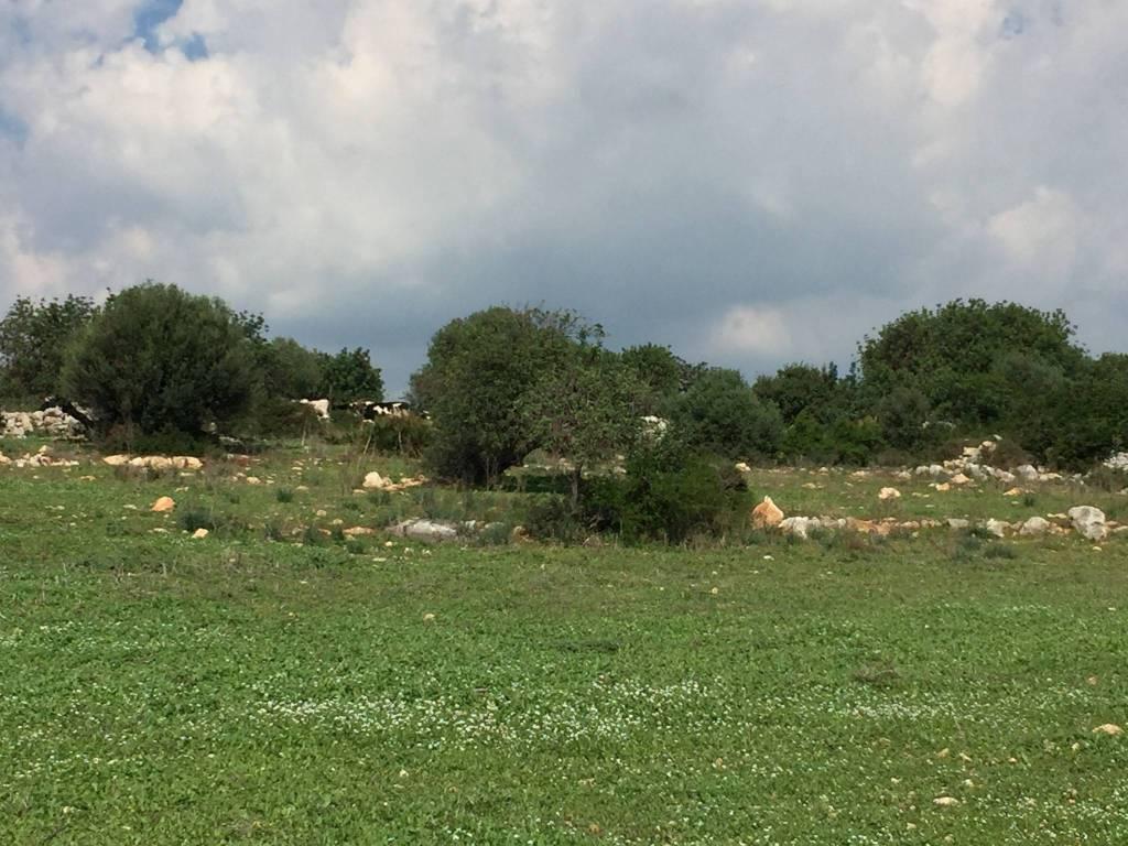 Terreno residenziale in Vendita a Scicli: 10000 mq