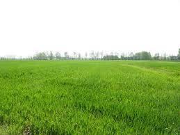 Terreno Agricolo in vendita a Govone, 9999 locali, prezzo € 830.000 | PortaleAgenzieImmobiliari.it