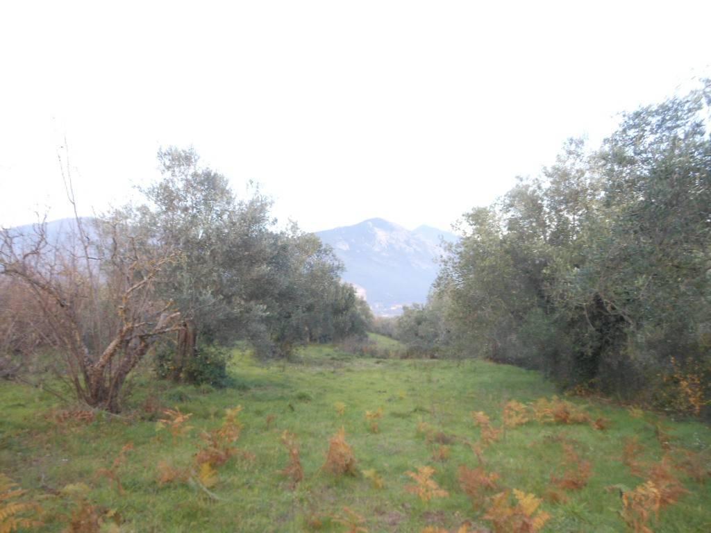Terreno Agricolo in vendita a Tora e Piccilli, 9999 locali, prezzo € 70.000 | CambioCasa.it