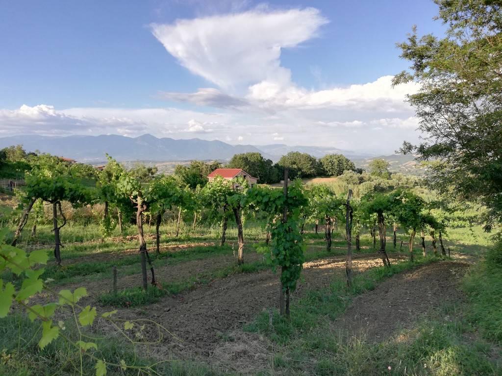Terreno Agricolo in vendita a Caiazzo, 9999 locali, prezzo € 65.000 | CambioCasa.it