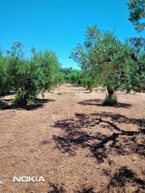 Terreno Agricolo in vendita a Ariccia, 9999 locali, prezzo € 23.000 | CambioCasa.it