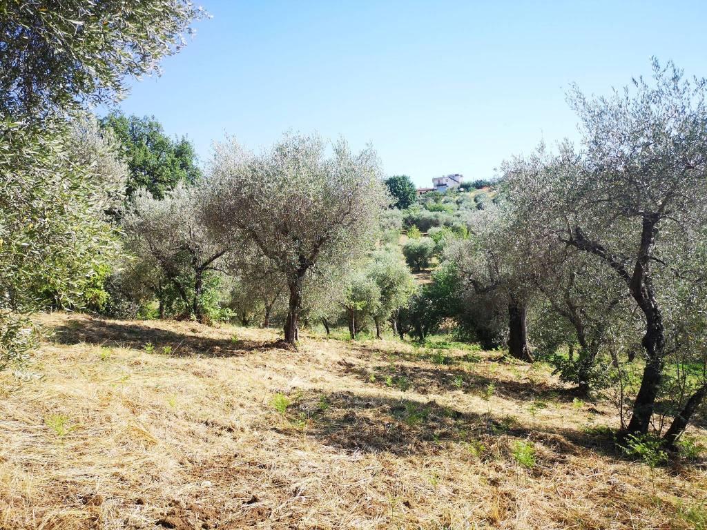 Terreno Agricolo in vendita a Fara in Sabina, 9999 locali, prezzo € 22.000 | CambioCasa.it