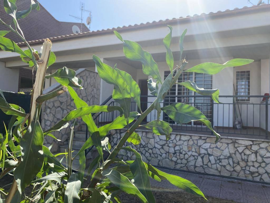 Villa a Schiera in vendita a Anzio, 4 locali, prezzo € 150.000   CambioCasa.it