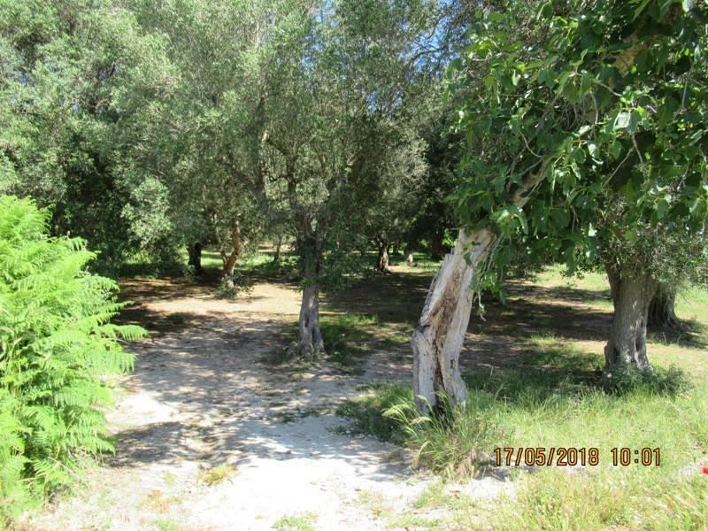 Terreno Agricolo in vendita a Otranto, 9999 locali, prezzo € 20.000   CambioCasa.it