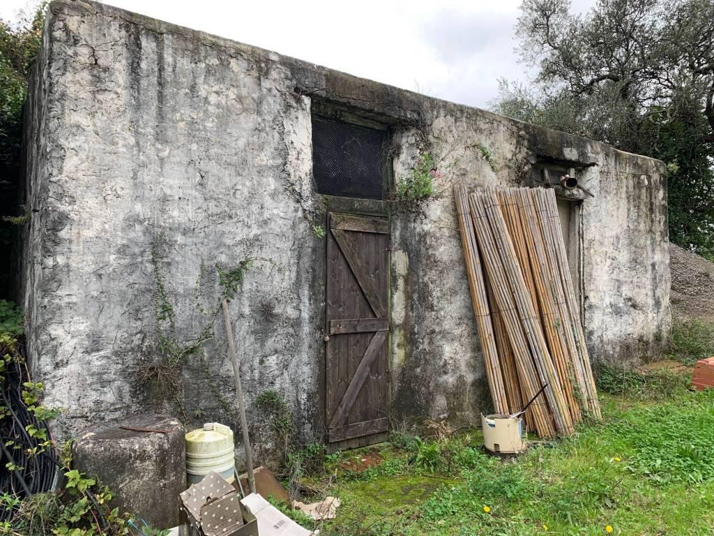 Terreno Agricolo in vendita a Vallebona, 9999 locali, prezzo € 80.000 | CambioCasa.it